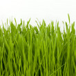 Stock Photo: Wheatgrass