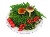 Mushrooms, moss, berries — Stock Photo