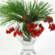 Branch of a pine and red berries — Stock Photo