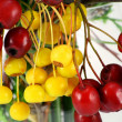 Постер, плакат: Red and yellow wood berries