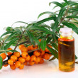 Stock Photo: Branch of ripe sea-buckthorn berries