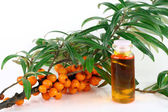Branch of ripe sea-buckthorn berries — Stock Photo