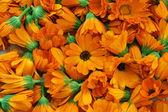 Calendula flowers — Stock Photo