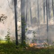 Fire in the forest — Stock Photo #2652789