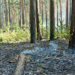 Stock Photo: Fire in the forest