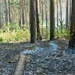 Fire in the forest — Stock Photo #2652811