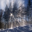 Sunbeam in forest at winter — Stockfoto