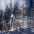 Sunbeam in forest at winter - Stock Photo