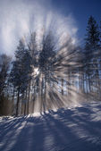 Sunbeam in forest at winter — Stock Photo
