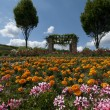 Stock Photo: Flowered field in Bad D?rkheim, Palatina