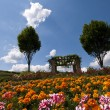 Flowered field in Bad D?rkheim, Palatina — Stock Photo