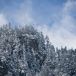 Snowed trees in Winter — Stockfoto