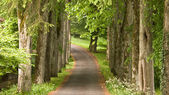 Path on the wood — Stock Photo