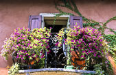 Flowers in Balcony — Stockfoto