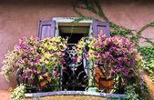 Květiny na balkon — Stock fotografie