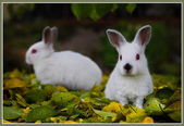 Young rabbits is very sad. — Stock Photo