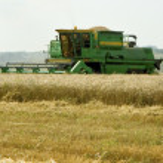 Постер, плакат: Harvester removes grains