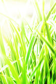 Sunny grass — Stock Photo