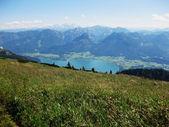 Meddow in the alps — Stock Photo