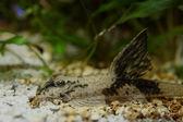 Ground fish — Stock Photo