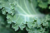 Close-up cabbage leaf — Stock Photo