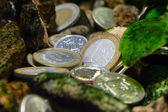 Coins - treasure on the river bottom — Stock Photo