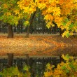 Yellow autumn park flooding in water - Stock Photo