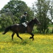Stock Photo: Young Girl Riding in Buttercups