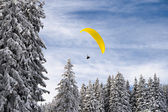 Gliding over the forest — Stok fotoğraf
