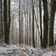 Stock Photo: Winter Time in forest