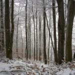 森林の冬時間 — ストック写真