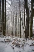 Winter Time in forest — Stock Photo