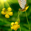 Nice butterfly on a yellow flower - Stock Photo