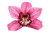 紫兰花花 — 图库照片