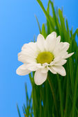 Flower in grass — Stock Photo