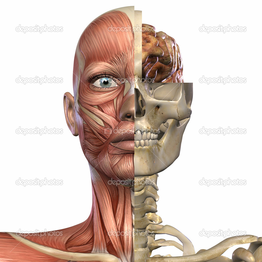 3D Render of an Female Anatomy Body — Stock Photo #2619539