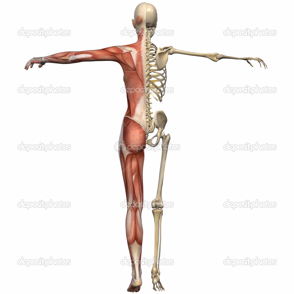 3D Render of an Female Anatomy Body — Photo #2650818