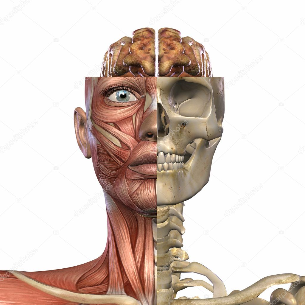 3D Render of an Female Anatomy Body — Stock Photo #2650835