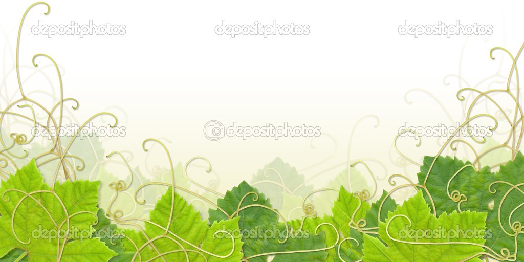 Grape leaves composite with paths - useful as footer or frame — Stock Photo #2661414