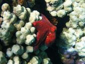 Chobotnice a korálový útes