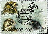 ZSRR - circa 1990: kompozycja ptaki zestaw znaczków, circa 1990