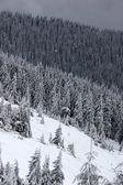 Horské svahy s jehličnatého lesa