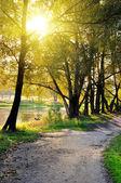 út, átkelés egy őszi táj