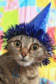 Promyšlené kočka v slavnostní čepice
