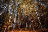 Autumn forest