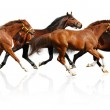 thumbnail of Herd gallops