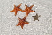 Tengeri csillag homokos alján