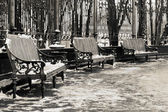 Three benches in a park