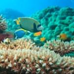 thumbnail of Underwater panorama