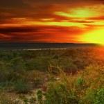 thumbnail of Sunrise in african savanna